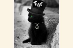 Black Brassy Kitten
